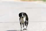 feral dog walking on the street poster