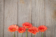 canvas print picture - Wooden background with orange gerbera flowers