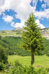 Nadelbaum vor Bergrücken