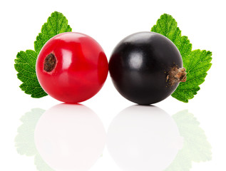 red and black currants with leaves isolated on the white backgro