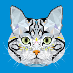American Short hair Cat vector polygon geometric