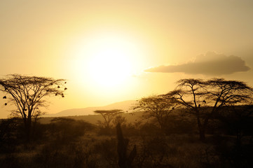 Sunset with African savanna trees