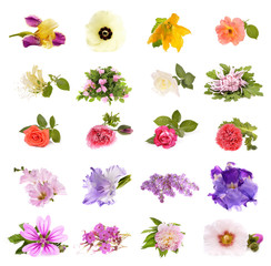 Collage of beautiful spring flowers , isolated on white
