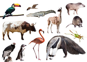 giant anteater and other animals of South America