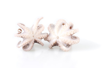 Little octopus isolated on white background