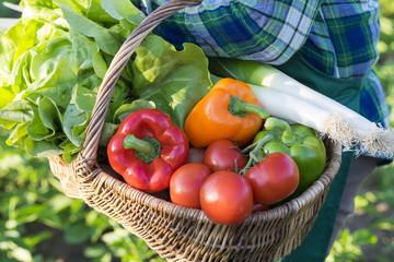 Un jardinier porte un panier de légumes