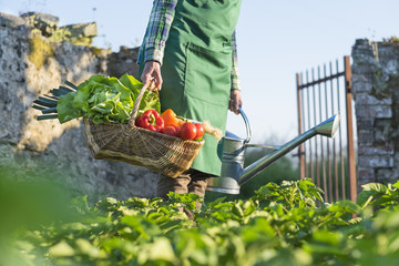 Un jardinier porte un panier de légumes dans son jardin