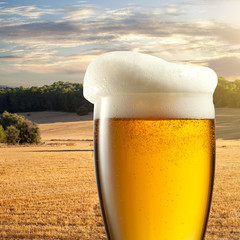 Glass of beer against wheat field