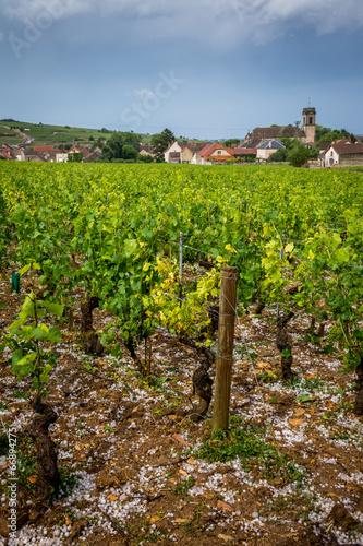Papiers peints Culture grêle dans les vignes