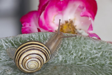 Antenna snail close up portrait