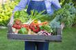 Un jardinier porte un Panier de légumes - 66895675