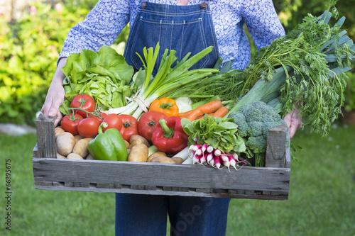 Fototapeta Un jardinier porte un Panier de légumes