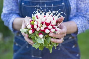 Une botte de radis dans les mains d'une femme