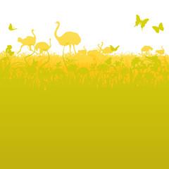 Vogelstrauß und Straußenherde in der Savanne