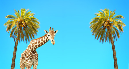 Coconut palms and giraffe