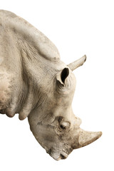 Head of rhinoceros