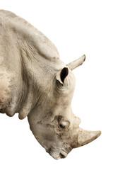 Head of rhinoceros