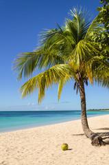 Coconut palm tree on exotic sandy beach