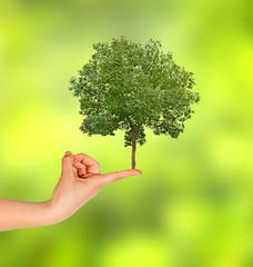 tree on finger