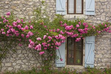 Fenster, Fensterläden und blühende Rosen