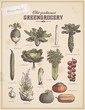 greengrocery 3 - set of vegetable illustrations - 66903406
