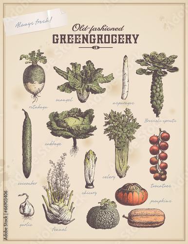 greengrocery 3 - set of vegetable illustrations