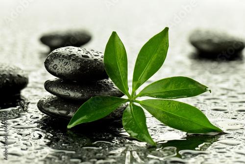 Kamienie bazaltowe z liściem - 66903616