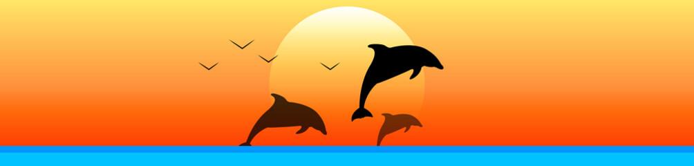 delfini, tramonto