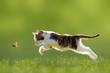 Katze, Kätzchen im Sprung - 66904850