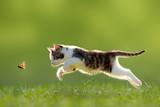 Fototapety Katze, Kätzchen im Sprung