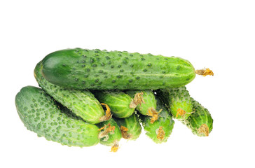 pile of cucumber with dry flowe isolated over white