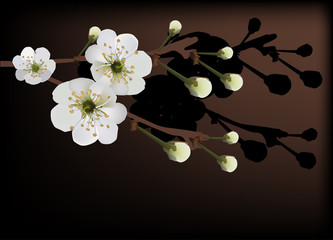 white spring tree blossom on dark background