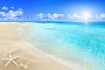Shells on sunny beach