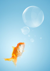 Smart goldfish and callouts like a bubble, on blue background