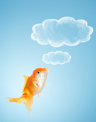 Goldfish thoughts on blue background