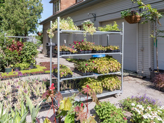 Nursery garden with bedding plants
