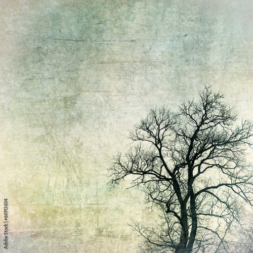 grunge frame with tree silhouettes © javarman