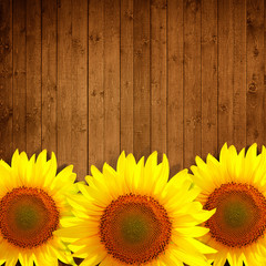 sunflower leaning on natural wooden background