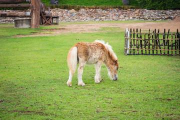 little horse on field green grass