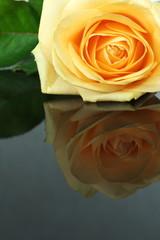 róża z odbiciem