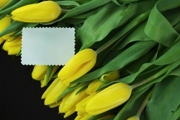 tulipany z dedykacją
