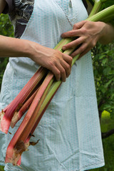 Woman holds rhubarb