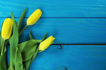tulipany żółty