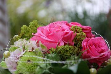 Rose Blumen