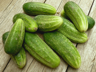 fresh harvested cucumbers