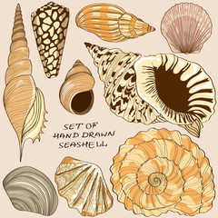 Set of isolated seashell icons