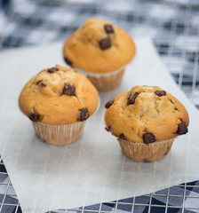 Home made tasty chocolate chip muffins on cooling rack