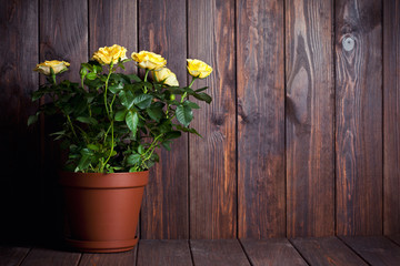 yellow roses in pot on wooden table