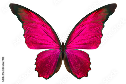 beautiful butterfly isolated on white - 66927413