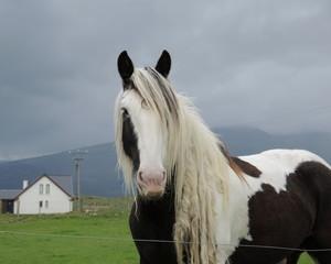 Cheval irlandais